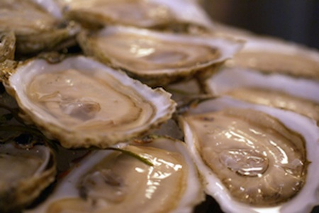 Live Virginica Oyster